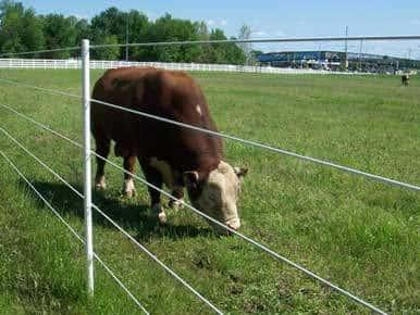 ¿Cuál es el Efecto de la Corriente Eléctrica en un Animal?