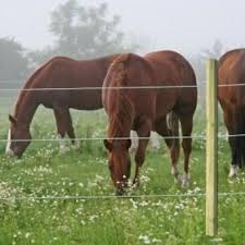 Cerco Eléctrico para Seguridad de sus Animales y su Ganado